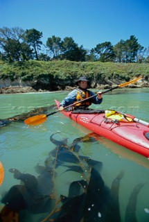 Bryan Jones paddles a section of coast near San Simeon on the central coast of California